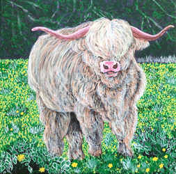 Time-Lapse: Highland Cow