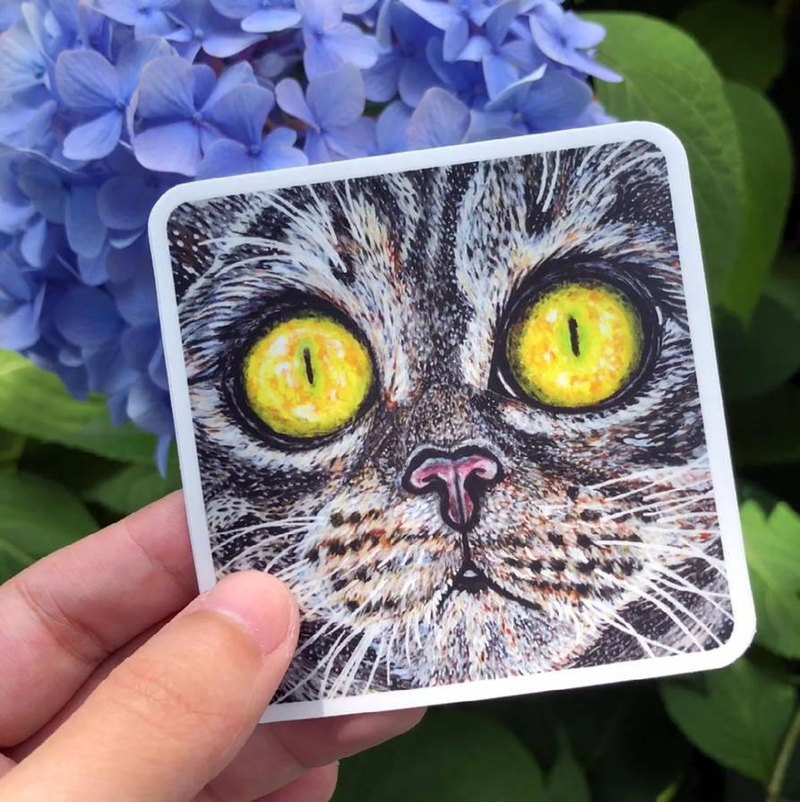 Tabby Cat Pic Copy
