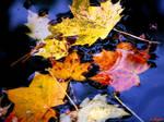Herbstlaub im Brunnen