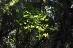 Hawaii Rainforest Stock 1