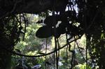 Hawaii Rainforest Stock 2