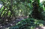 Hawaii Rainforest Stock 3