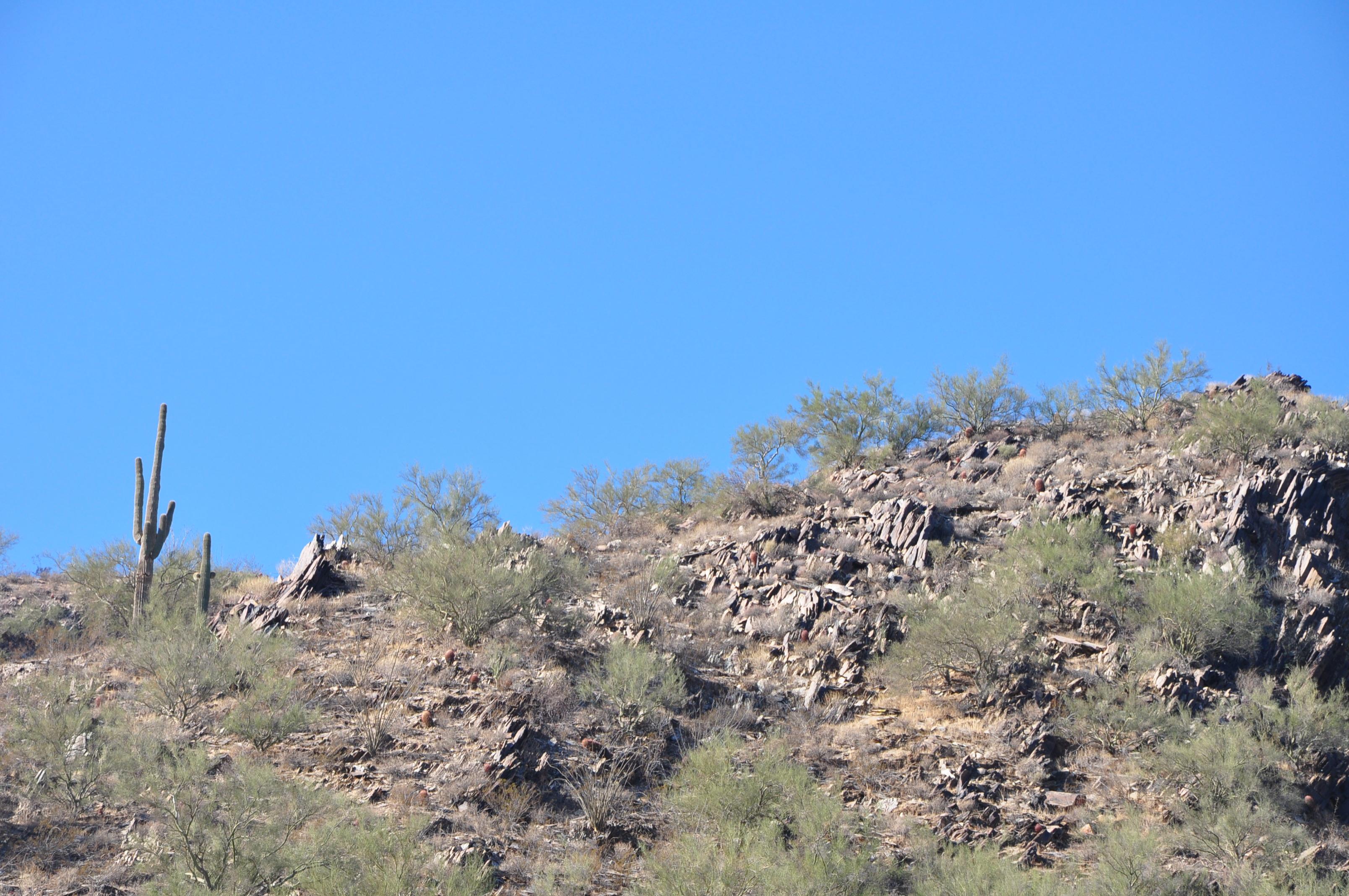 Desert Stock 1