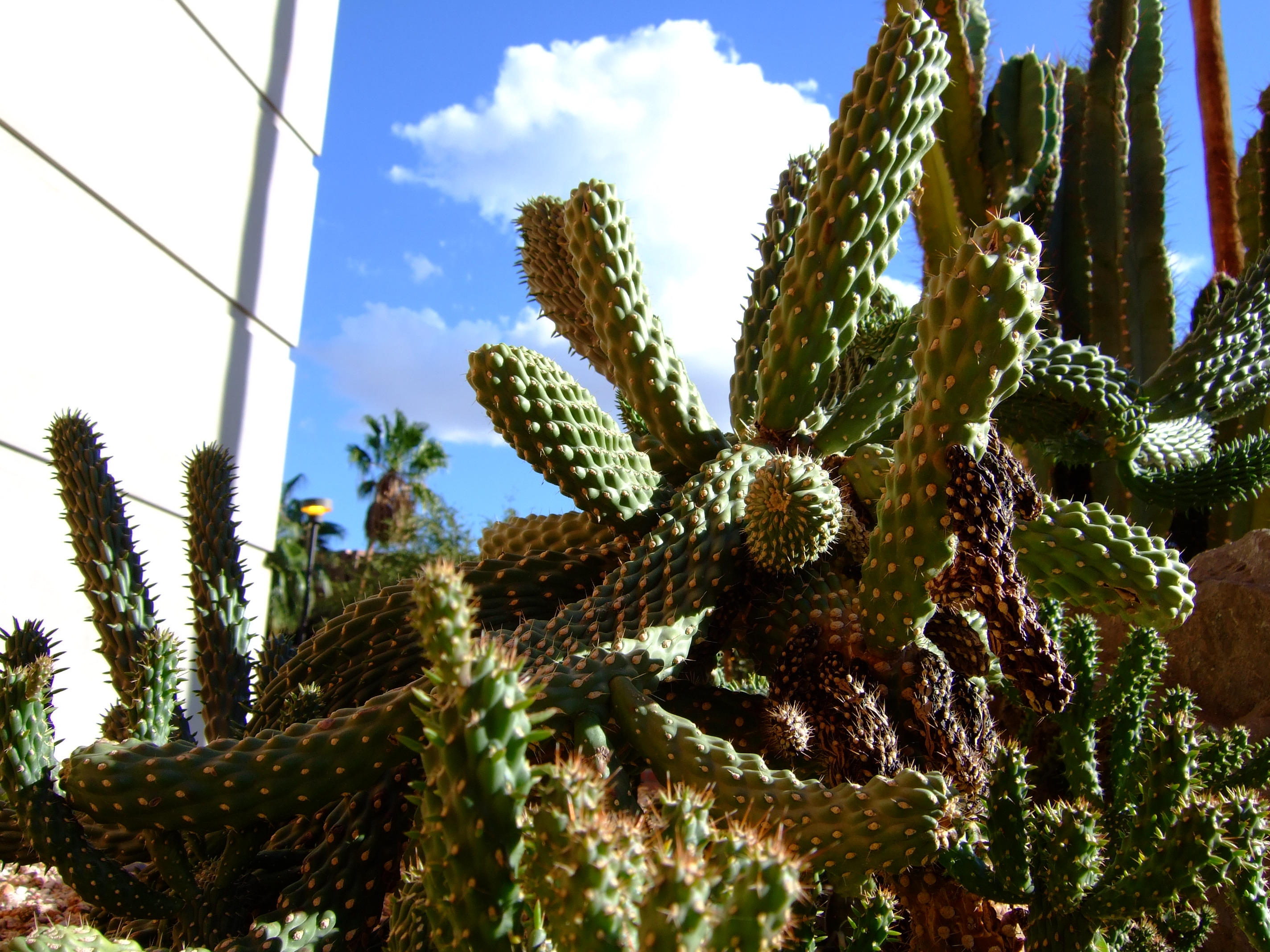 Cactus 6 by Spiteful-Pie-Stock