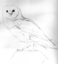 Barn Owl Study