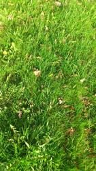 Green Grass Wallpaper by Bullrick