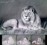 Drawing Lion with Traditional Charcoal