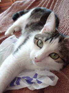 Ichiruchan's Profile Picture