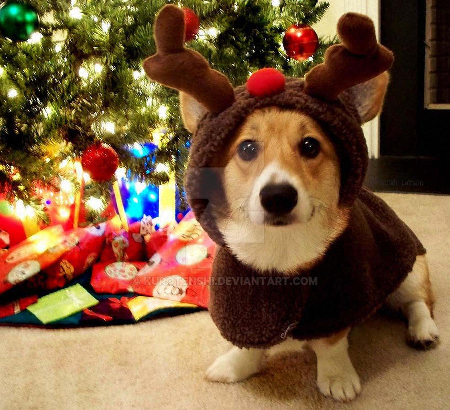 A Corgi Christmas by KuroTenshi on DeviantArt