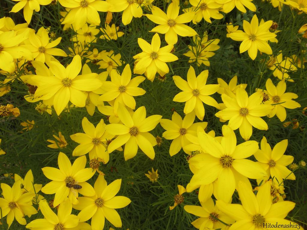 Yellow Flowers By Hitodenashi23 On Deviantart