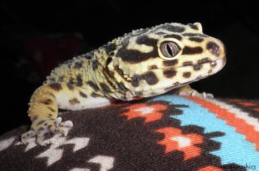 Gecko by Hitodenashi23