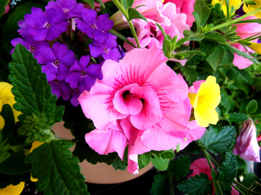 Pink and purple flowers by dracornasus on deviantart pink and purple flowers by dracornasus mightylinksfo