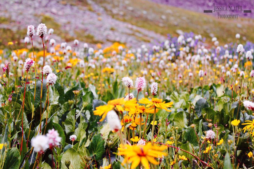 Wildflowers by SlateJe