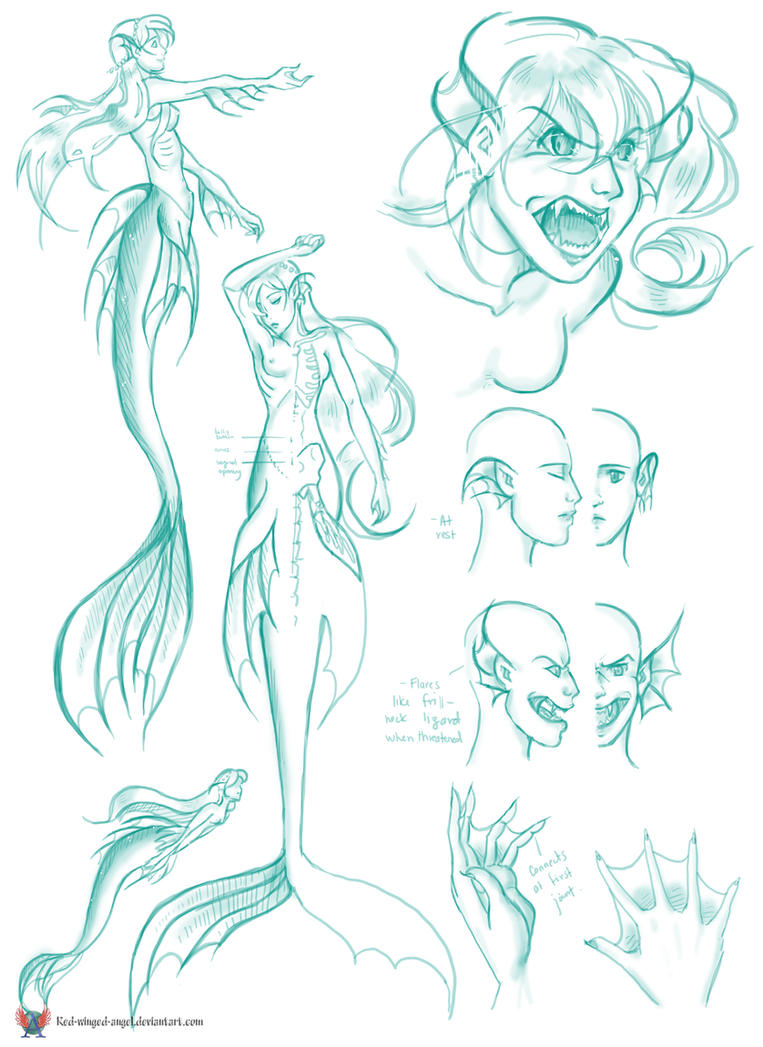 Mermaid Anatomy By Red winged angel On DeviantArt