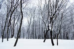 stock: winter forest 5(credit and show the result)