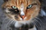 cat close up stock