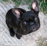 dog portrait stock