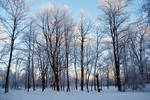 snowy winter sunset park stock