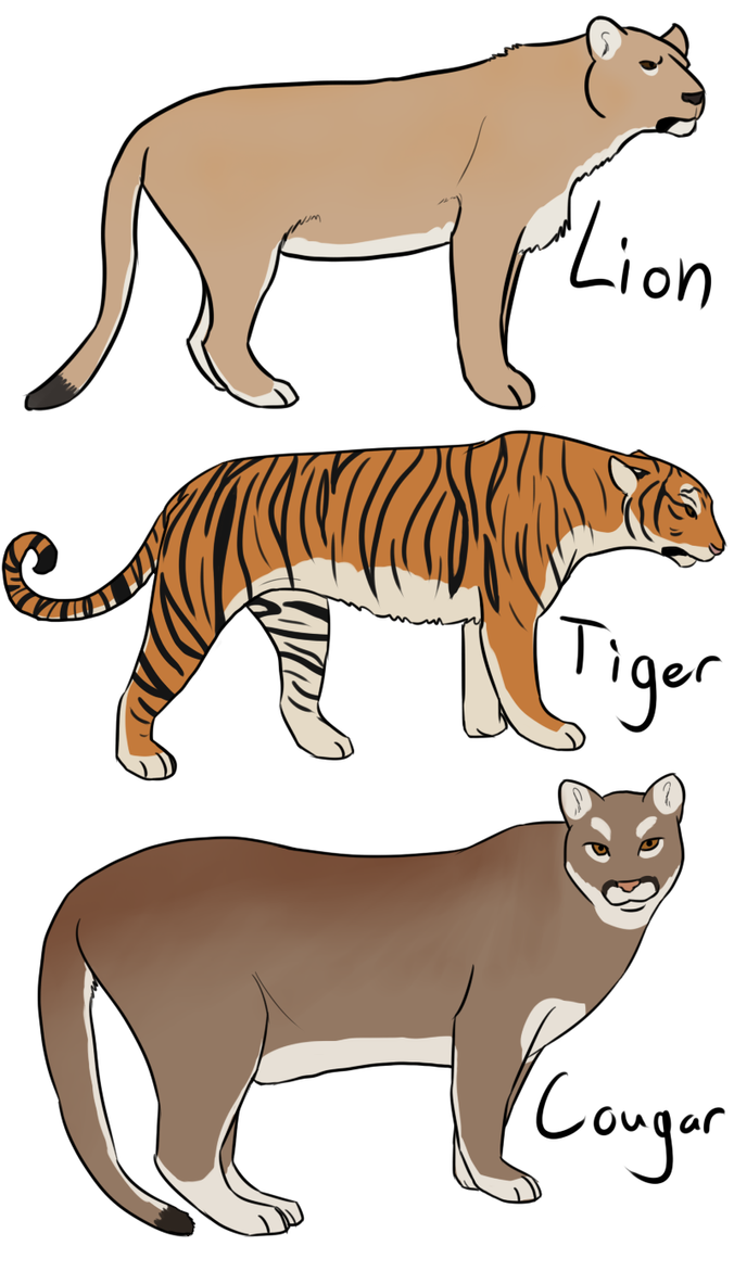 What kind of cat looks like a tiger