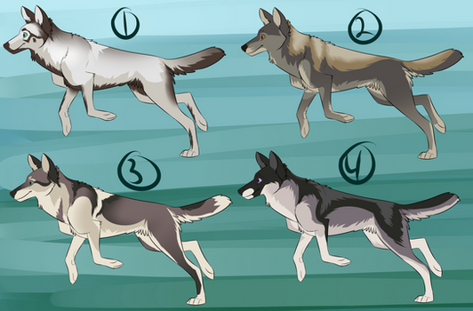 Wolf Adopt Batch (OPEN)