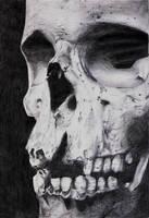 Skull Study by Shomatics
