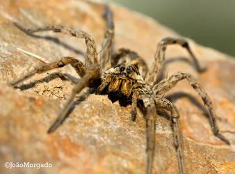Spider by bioimage