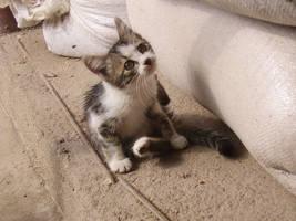 Kitty by delyan86