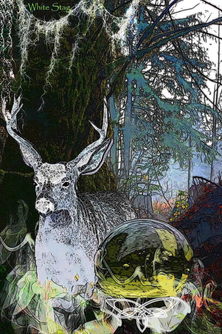 White stag by rustymermaid on deviantart white stag by rustymermaid buycottarizona Images
