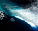 Origins of Sea foam