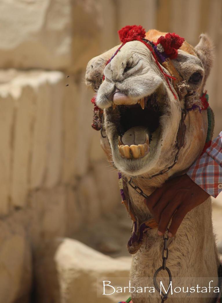 Camal Comedian by rustymermaid