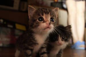 Teh kittens by PinkieBroaster