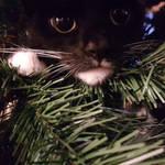 Christmas Kitty :)