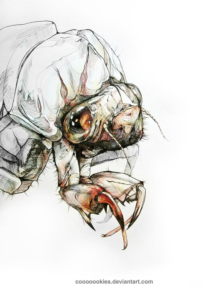 Cicada Exuvia by Cooooookies