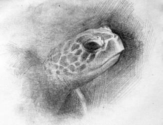 Sea Turtle by Cooooookies