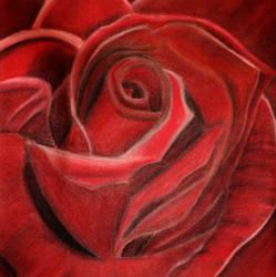 Rose by magicbananas