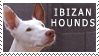 Ibizan Hound Stamp by Hatter2theHare