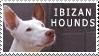 Ibizan Hound Stamp by Boofrickittyhoo