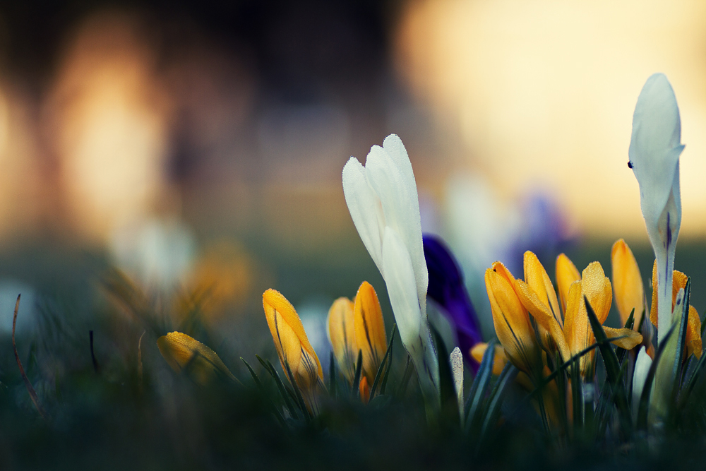 Springtime colours by 2Jingz