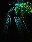 Light 8 by Pointsettia