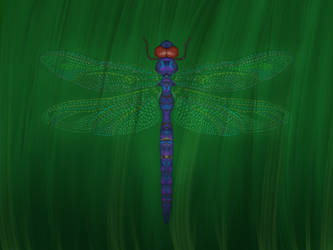 Dragonfly by birds-on-a-wire