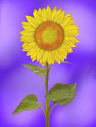 Sunflower by birds-on-a-wire