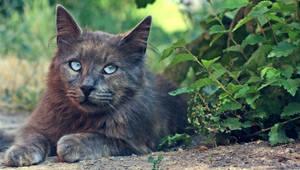 Beautiful Eyes by berkcanaksoy