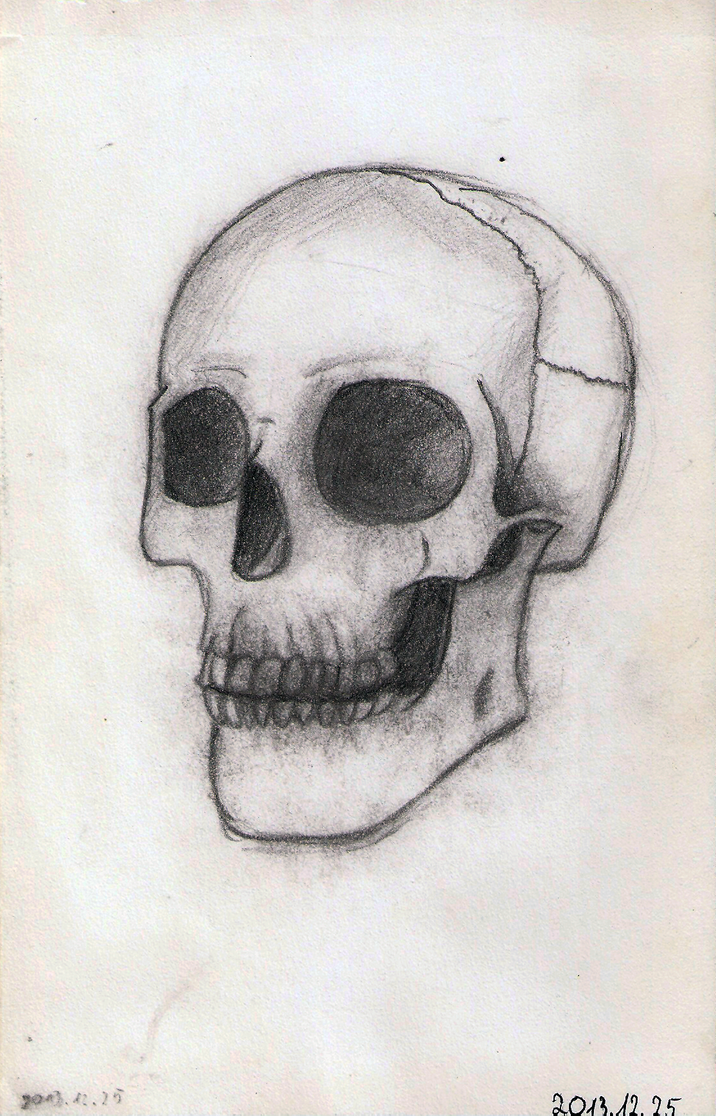 Skull sketch 01 by DrunkHedgehog