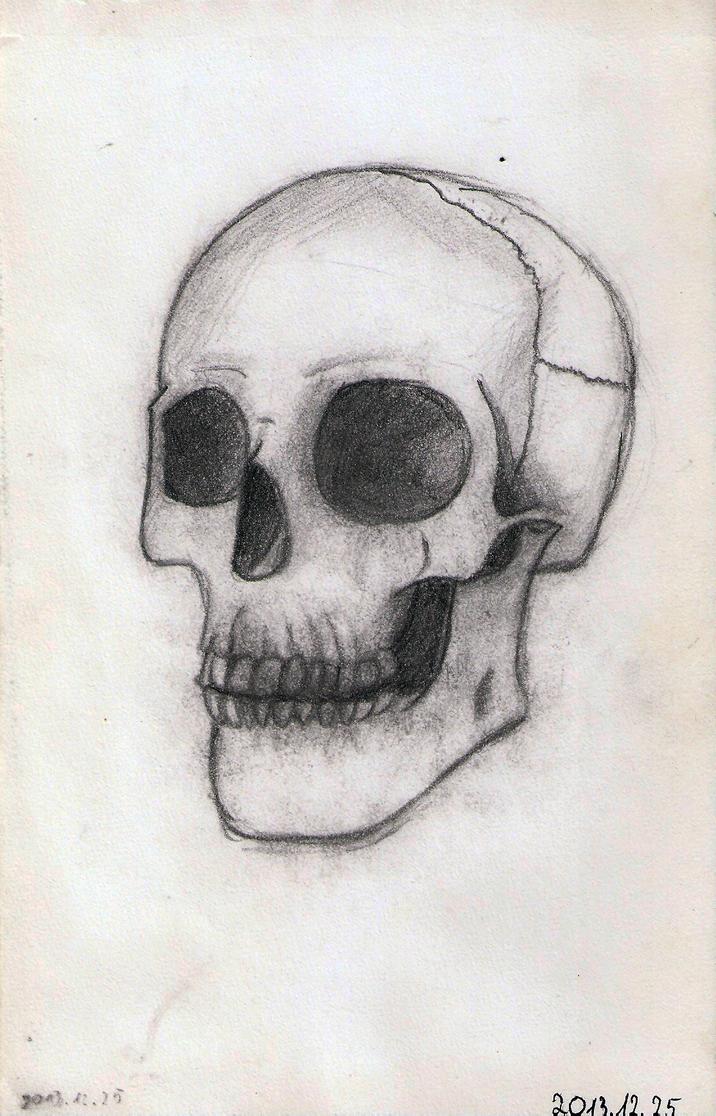Skull sketch 01 by DrunkHedgehog