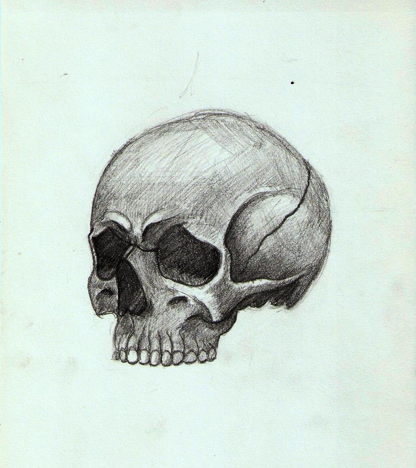 Skull 03 by DrunkHedgehog