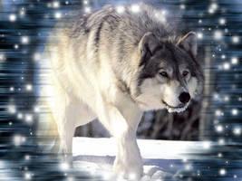 Wolf Wallpaper by KittieSlasher