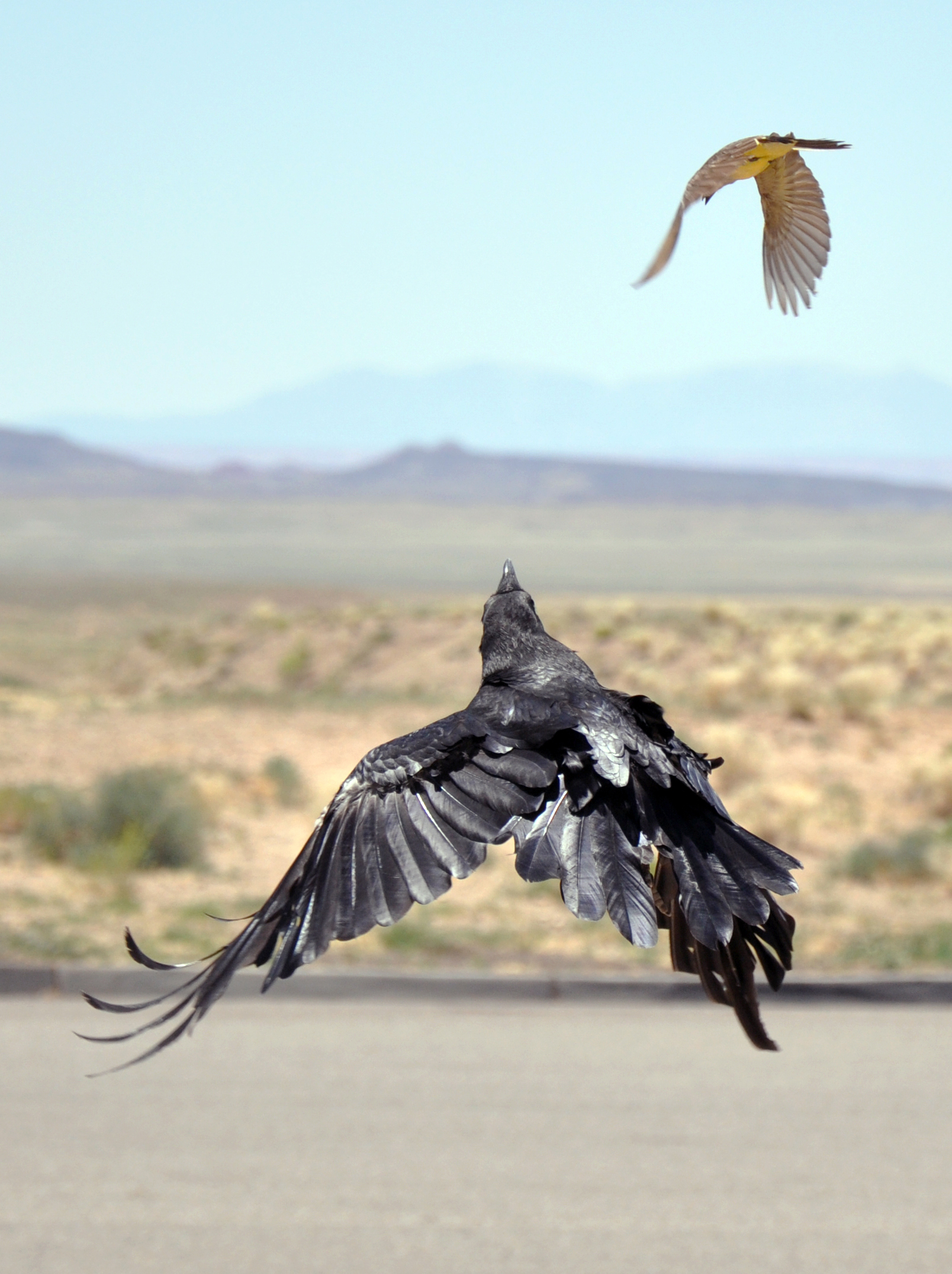flight by nothakus