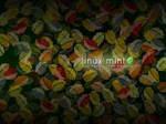 Mint Autumn