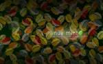 Mint Autumn - wide