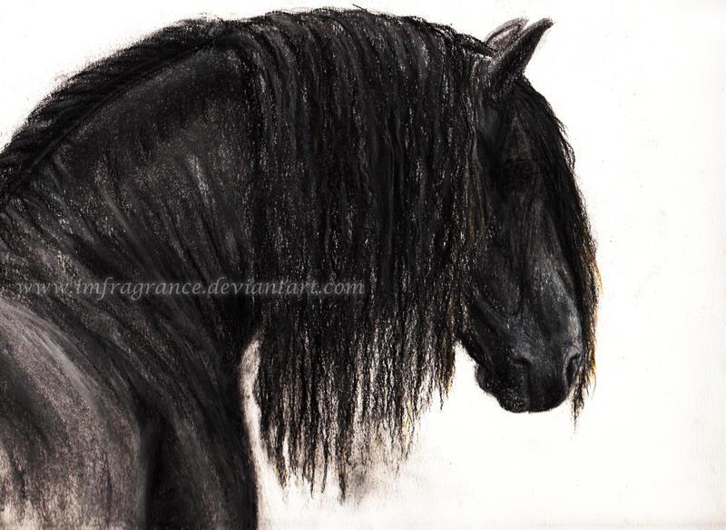 Friesian Horse Head Friesian Horse by Imfragrance